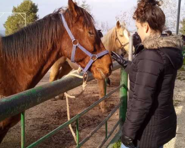 horseback riding in israel